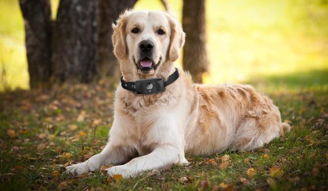 motorola-scout-5000-collar-para-perros-inteligente-2-2
