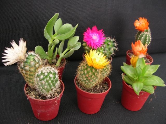 d8-cactus