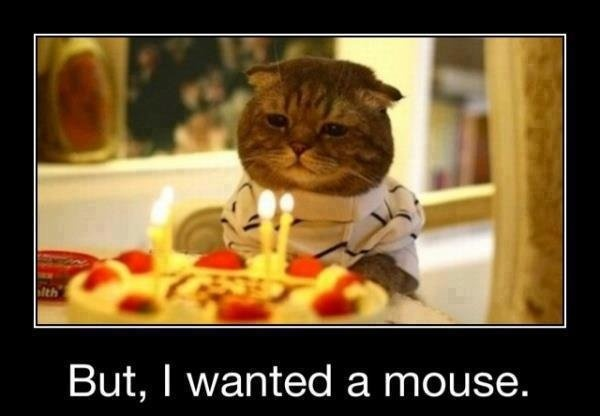 funny-birthday-pictures-of-cat
