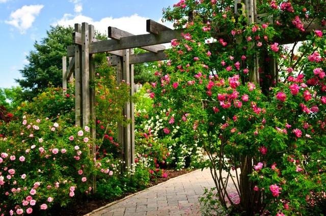 A8-rosas-del-jardin