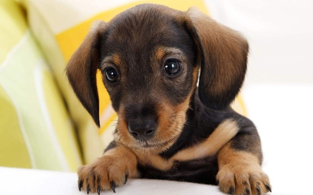 puppy-dog-eyes-pictures-desktop-backgrounds