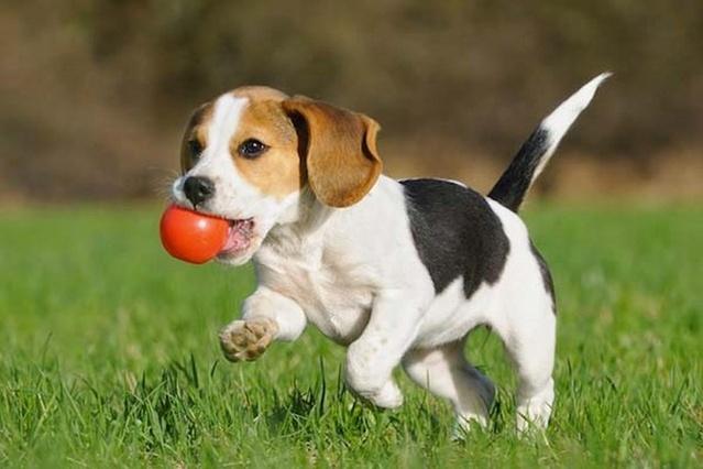 perro-jugando_Copiar