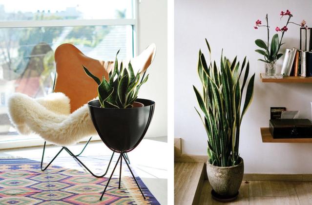 Plantas que requieren poca luz blogup espa ol - Plantas de interior que necesitan poca luz ...