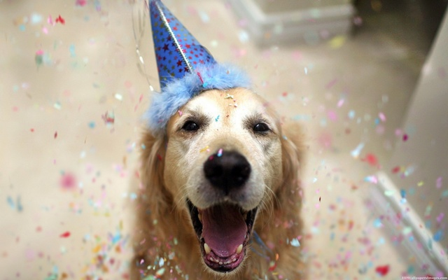 Happy-Birthday-Images-Dogs